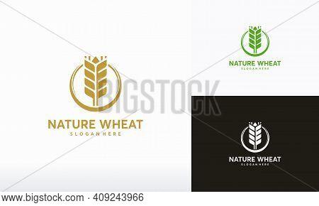 Organic Wheat Logo Designs Concept Vector, Modern Wheat Grain Symbol, Agriculture Logo Symbol