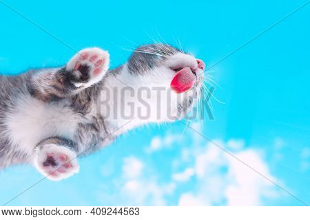 Bottom View Of A Cute Funny Tabby Cat Licking Invisible Window Glass On A Blue Sky Background. Funny