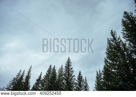Silhouettes Of Fir Tops On Cloudy Sky Background. Atmospheric Minimal Forest Scenery. Tops Of Green