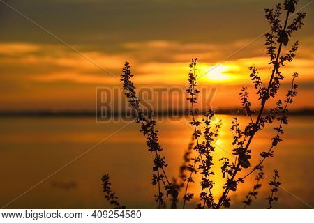 Grass Field Sunset Beautiful Landscape With Grasses Meadow On Sunlight. Countryside Heaven Amazing F