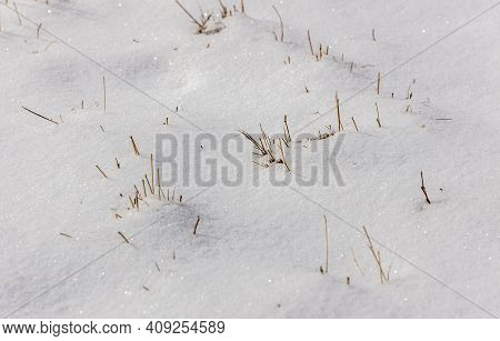 Close-up Of Pristine Snow With Yellowed Reed And Grass Stems Stick Out Here And There Above The Snow