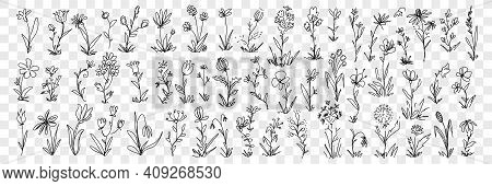 Blooming Flowers And Floral Decoration Pattern Doodle Set. Collection Of Hand Drawn Blossom Flowers