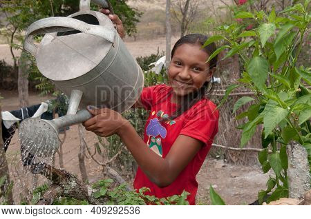 Rivas, Nicaragua. 07-15-2016. Girl Watering The Plants In An Rural Areas Of Nicaragua. Families Rely