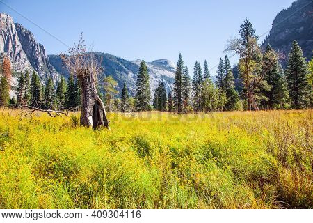 Yosemite Valley. Autumn yellowed grass in the meadows of the valley. Yosemite Park is located on the slopes of the Sierra Nevada. The rock-monolith El Capitan