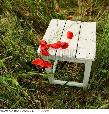 Beautiful poppy flower is on the grunge obsolete wooden stool at meadow