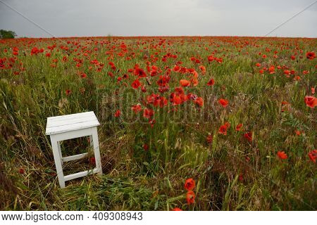 Old obsolete wooden stool stands at poppy meadow