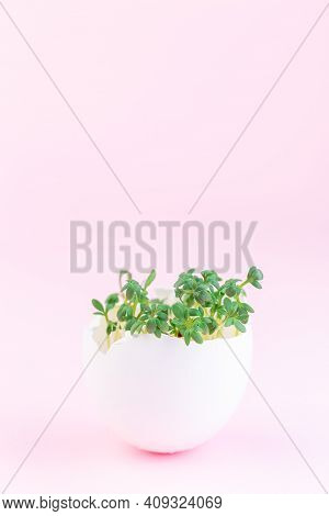 Spring Sprouts, Garden Cress In Eggshell, On A Pink Background, Vertical, Copy Space
