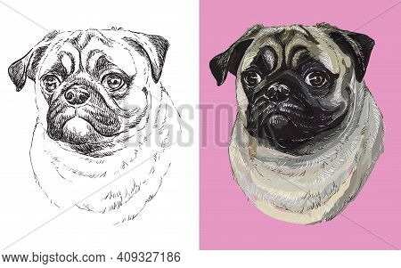 Realistic Head Of Pug Dog. Vector Black And White And Colorful Isolated Illustration Of Dog. For Dec