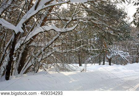 Winter Road In A Snowy Forest In Sunlight