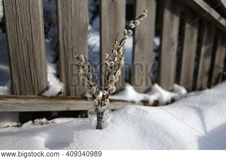 A Bunch Of Blossoming Pussy Willow In A Vase Stands In The Snow.