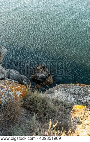 Great Cormorant Phalacrocorax Carbo , Also Known As The Great Black Cormorant Sits On A Rock By The