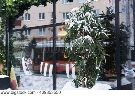Snow-covered Bamboo In Front Of The Doors Of A Street Cafe