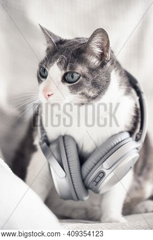 Adult Domestic Cat With Headphones. Pet Music. White Gray Cat Listening Music At Home. Cat Dj, Pets