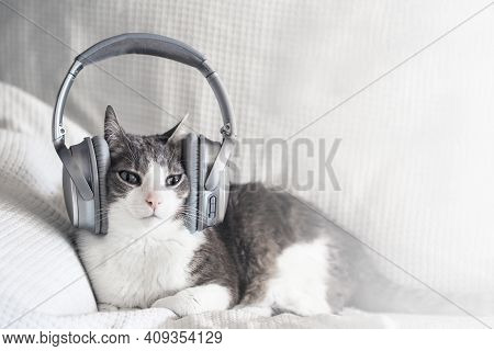 Adult Striped Cat Listening Music In Headphones On White Bed. Musical Pets. Copyspace. Funny Cat Wit