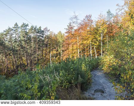 Sandy Footpath At Colorful Autumn Deciduous Beech, Birch And Pine Tree Forest At Sunny Day