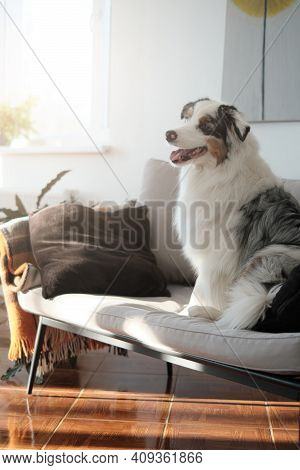 Cosy Living Room With Minimalistic Style And Modern Furniture In Daytime. Only Dog. Cheerful Austral