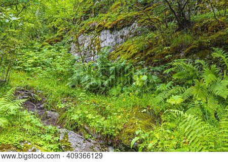 Hiking Trails In Norwegian Nature Through Mountains Forests Utladalen Norway.
