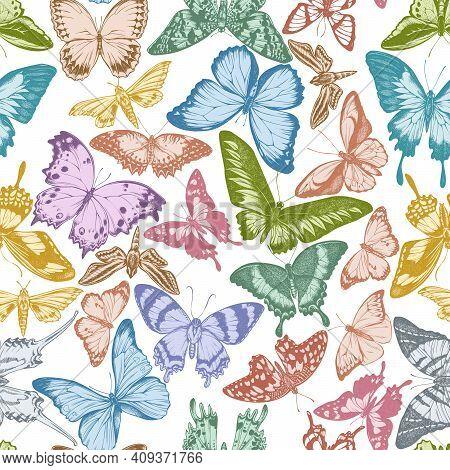 Seamless Pattern With Hand Drawn Pastel Jungle Queens, Plain Tiger, Rajah Brooke S Birdwing, Papilio