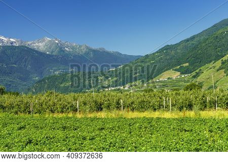 Sentiero Della Valtellina, Sondrio Province, Lombardy, Italy: Rural Landscape With Vineyards And App