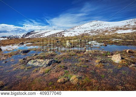 alpine tundra close to Forest Canyon Overlook in Rocky Mountains National Park, Colorado, USA