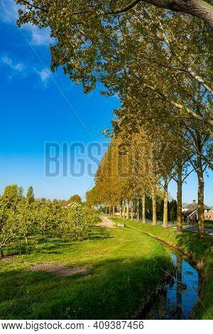 Spring Nature Landscape In Betuwe, Gelderland, Netherlands