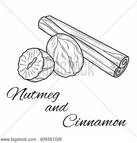 Nutmeg And Cinnamon.coloring. Illustration Isolated On White Background.zen-tangle Style.