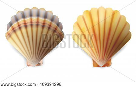 Realistic Detailed 3d Shell Set Isolated On A White Background. Vector Illustration Of Scallop Seash
