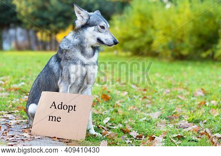 Unhappy, Sad, Lost, Abandoned, Stray, Homeless  Dog With Cardboard With Inscription Adopt Me. Pet Ad
