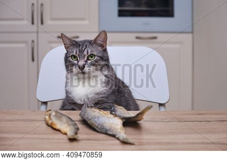 The Cat Looks At The Fish Lying At Home In The Kitchen. Pet At The Home Table With Dried Roach