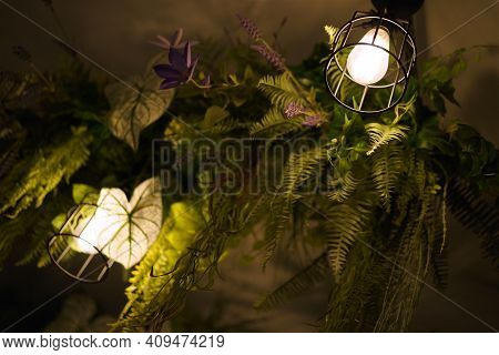 Ivy Green Garden with Light Bulbs Hanging on The Ceiling. Home Decorate Interior Green Garden.