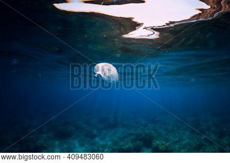 Jellyfish Glides In Transparent Blue Ocean Underwater