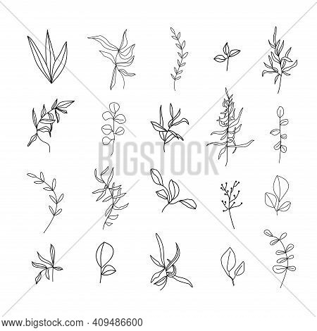 Set Of Linear Various Leaves And Herbs. Floral Botany Collection. Black And White Art. Decorative El