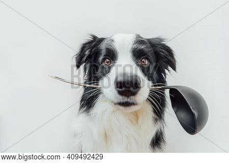 Funny Portrait Of Cute Puppy Dog Border Collie Holding Kitchen Spoon Ladle In Mouth Isolated On Whit