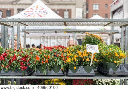 Colorful Flowers And Plants At A Stand On A Sttreet Market In South Manhattan, Nyc, Usa