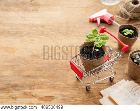 Shopping Cart With Basil Seedling, Agricultural Tools On Wooden Table. Spring Sale In Mall And Flowe