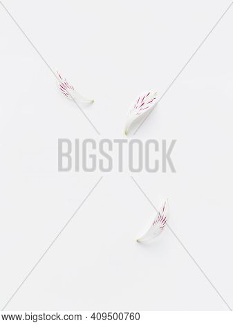 Top View On Flower Petals On White Background. Monochrome Minimalist Background With Copy Space.