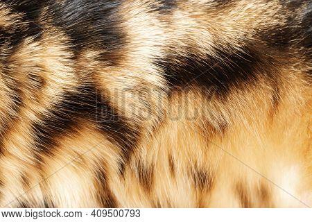 Texture Fur Of Bengal Cat Close Up Striped Fur, Skin