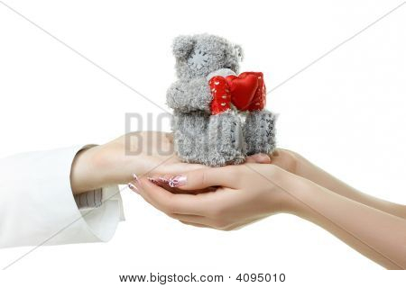 Hands Holding Teddy Bear Isolated On White
