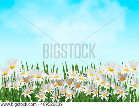 Spring Background With Chamomile Flowers, Green Grass, Blue Sky. Can Be Used For Easter, Birthday, W