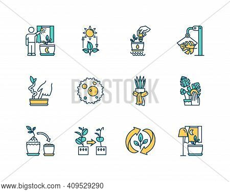 Houseplant Care Rgb Color Icons Set. Competent Photosynthesis. Proper Soil. Humidity Examination. Ca