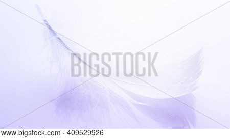 Feather Banner. Multicoloured Pastel Angel Feather Closeup Texture On White Background In Macro Phot