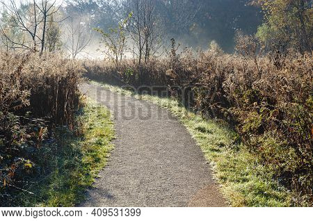 A Trail Winds Through Oldfield Oaks Forest Preserve In The Morning Mist In Autumn, Dupage County, Il