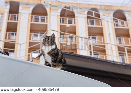 City Street Cat Sitting On The Hood Of An Car On A Blurred City Background