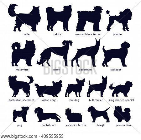 Dog Silhouettes. Various Breed. Doberman, Malamute And Labrador, Poodle And Corgi, Bulldog And Pug.
