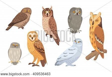Owl Species Set. Brown, Barn, Horned, Snowy, Eagle, Hawk Owls Isolated On White. Vector Illustration