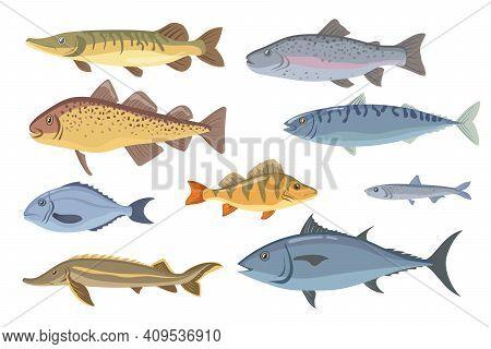 Sea And Freshwater Fish Set. Tilapia, Halibut, Sardine, Dorado, Herring, Salmon, Garfish Isolated On