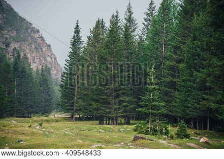 Atmospheric Green Forest Landscape With Firs In Mountains. Minimalist Scenery With Edge Coniferous F
