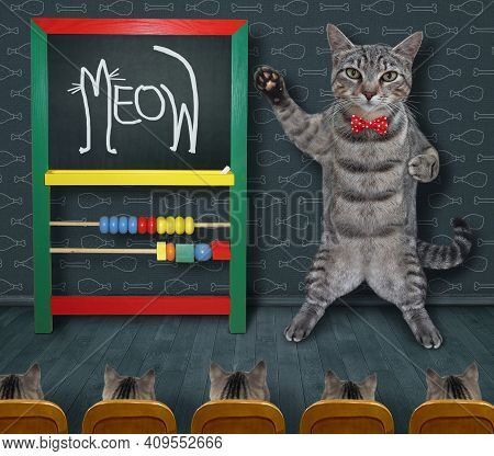 A Gray Cat Teacher Wrote Meow In Chalk On The Chalkboard.