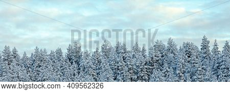 Panorama Of Winter Spruce Forest Covered With Snow, Winter Nature Background, Landscape