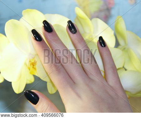 Female Hand With Beautiful Manicure Touching Flowers Of Orchid. Female Nails With Black Manicure. Mo